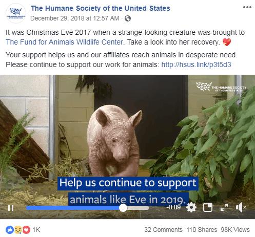The Humane Society seo for nonprofits
