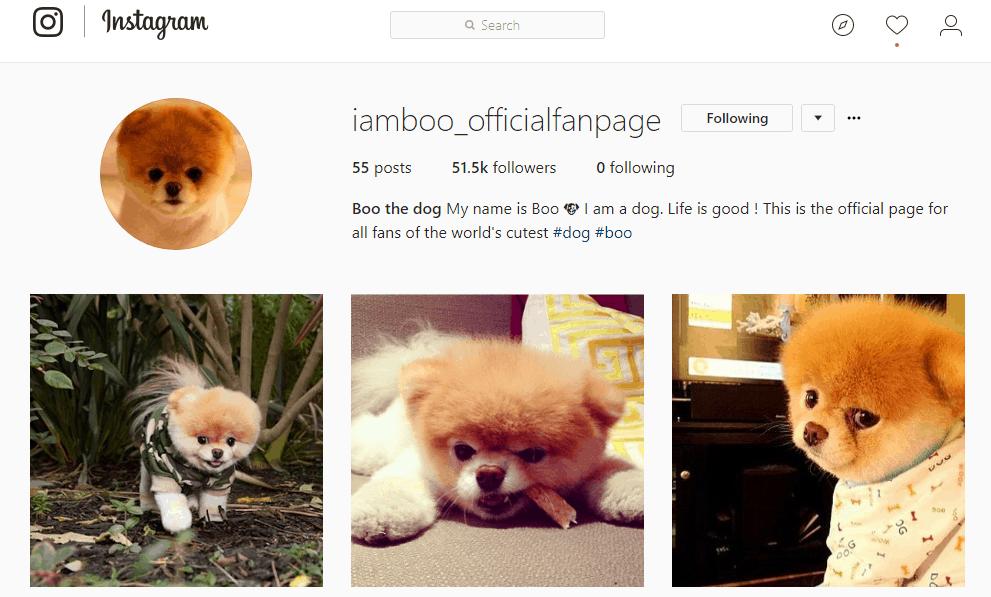 Iamboo Instagram fan page - Influencer Marketing Statistics
