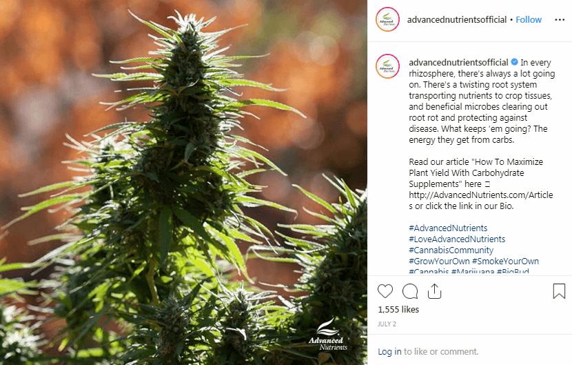 Instagram Marijuana Marketing Tactics